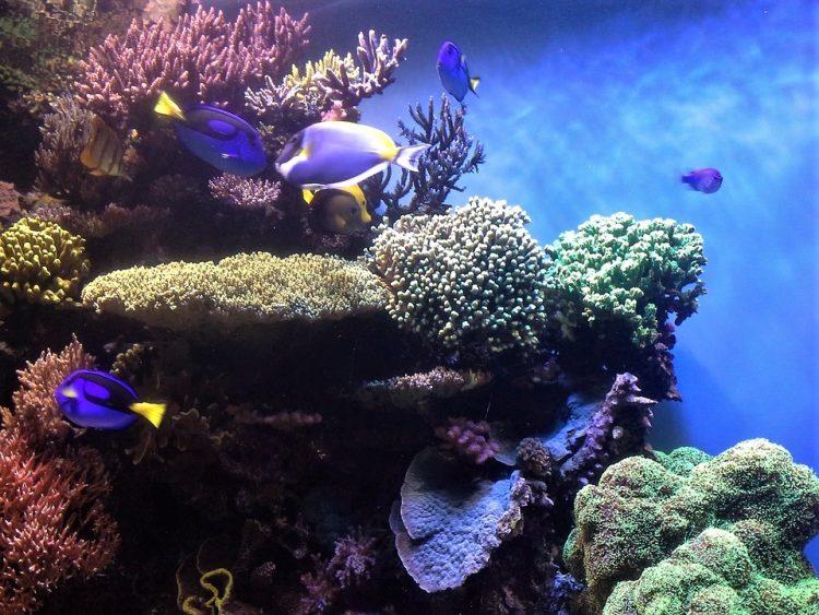 acquario di monterey